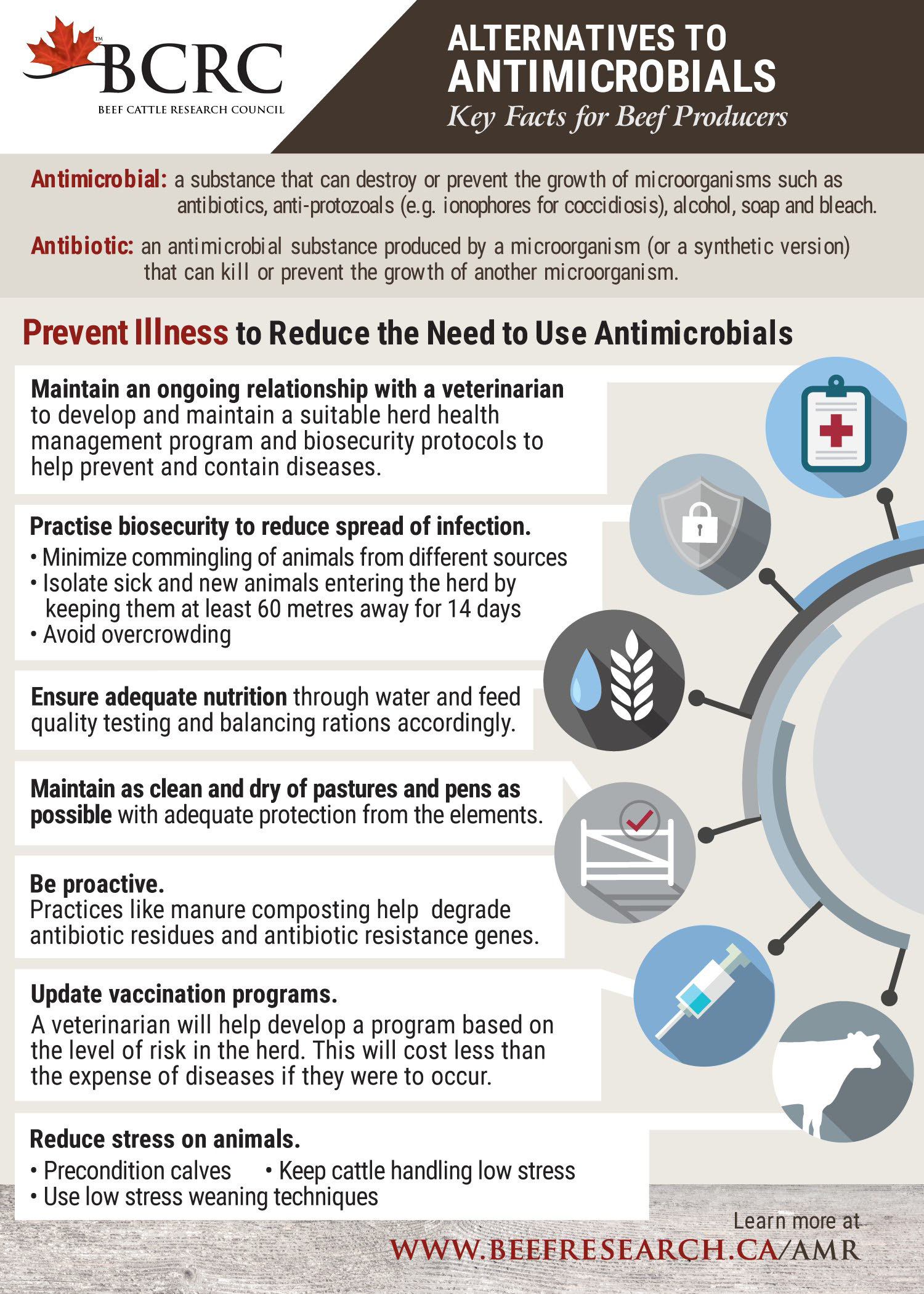 Infographic: Alternatives to Antimicrobials - Key Facts for Canadian Beef Producers
