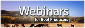 Webinars for Beef Producers
