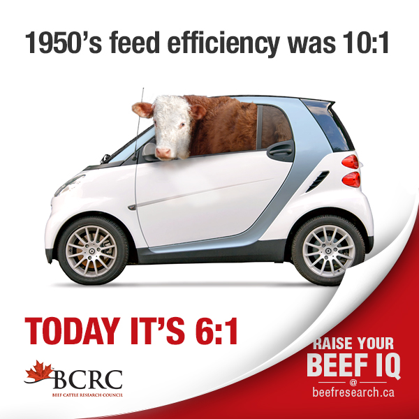 1950's feed efficiency was 10:1. Today it's 6:1.