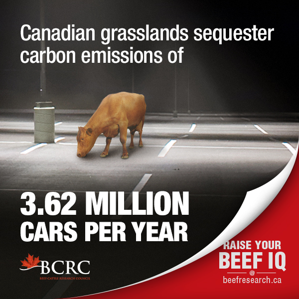 Canadian grasslands sequester carbon emissions of 3.62 million cars a year