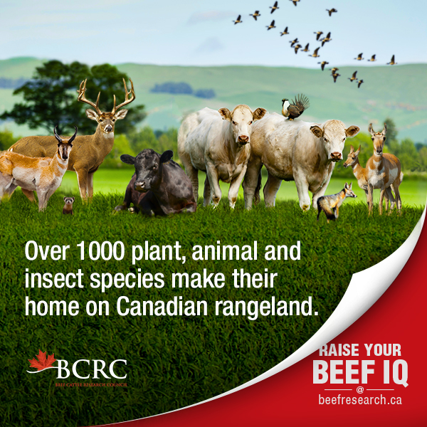 Over 1,000 plant, animal and insect species make their home on Canadian rangeland.