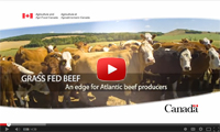 Video: new grass and legume mixtures for cattle forage to improve the quality of meat and growth results