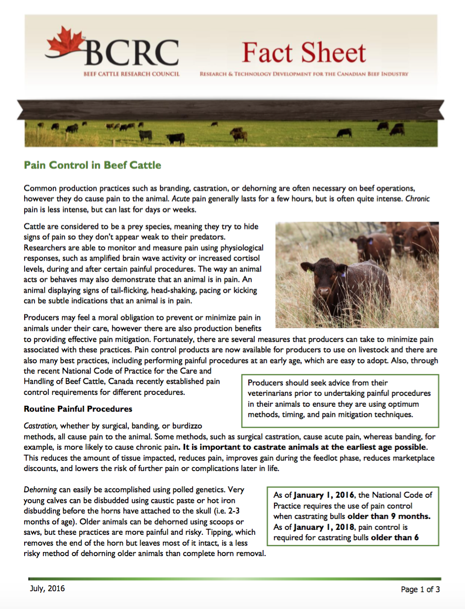 Pain Mitigation - Beef Cattle Research Council