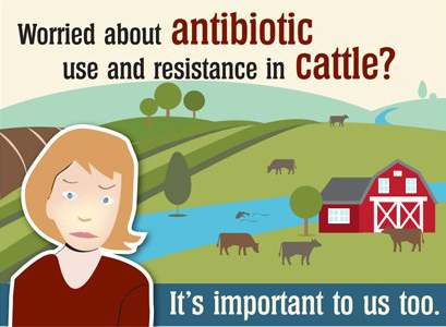 Worried about antibiotic use and resistance in cattle?