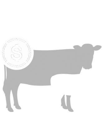 Value of Calving Distribution Decision Making Tool