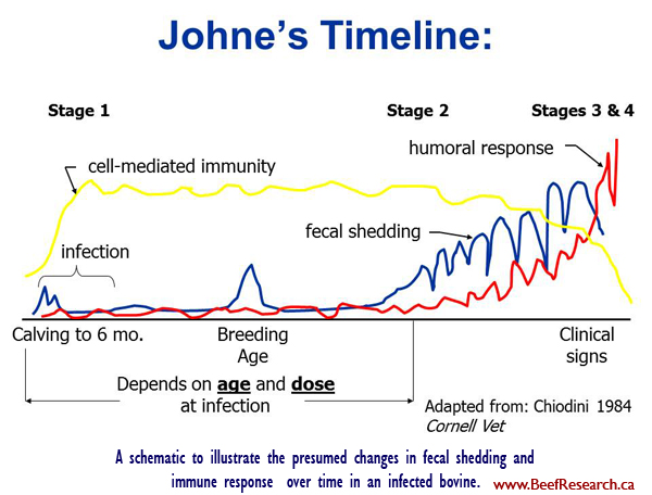 Johnr'd Disease timeline in cattle
