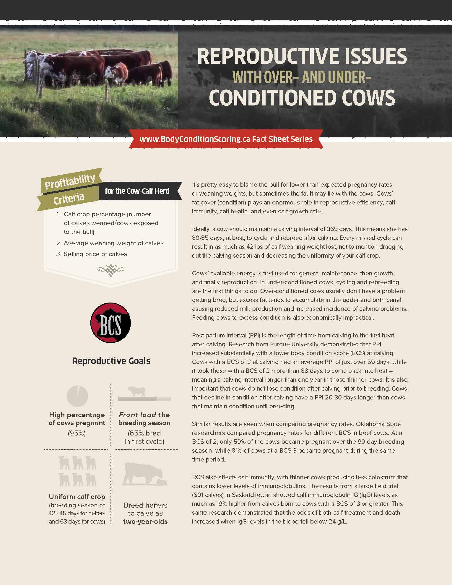 Fact sheet: Reproductive Issues with Overconditioned and Underconditioned Cows