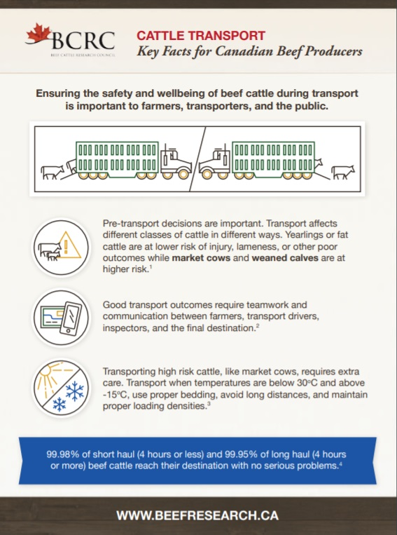 cattle transport key facts for beef producers infographic